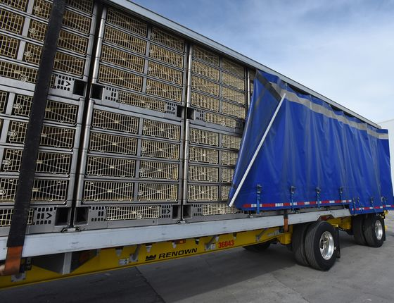 Perdue Unveils aMore Humane Chicken Slaughter Process