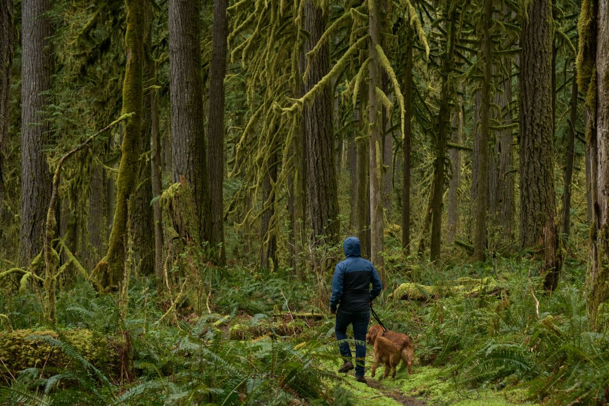 The Calming, Healthful Joy of Visiting an Old-Growth Forest Near You thumbnail