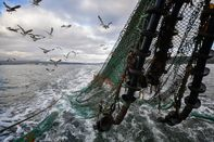 Scottish Seafood Exports At Risk If Brexit Brings Shipping Delays
