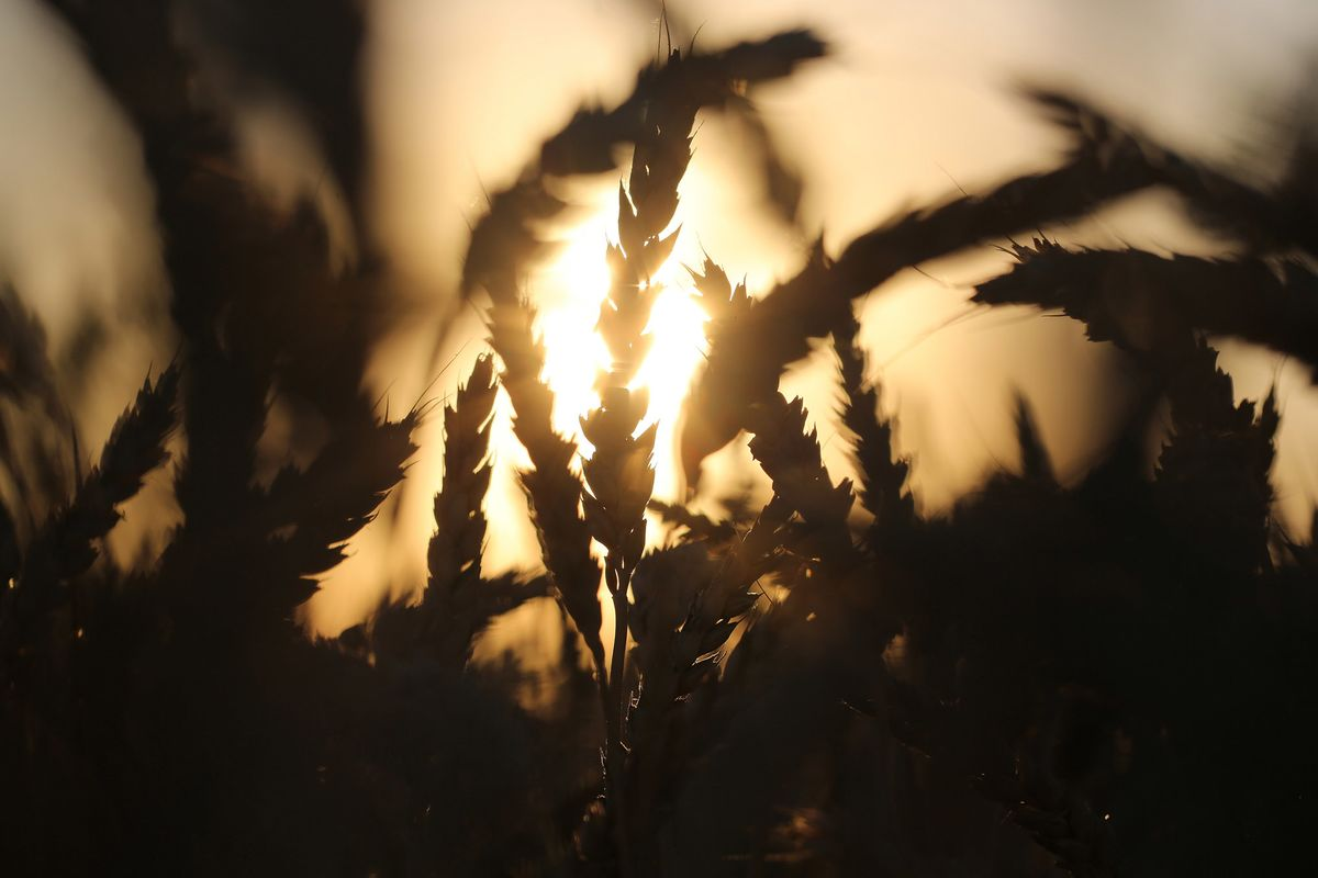 Russia Expands Grip on Wheat Exports as Asia Set to Buy More
