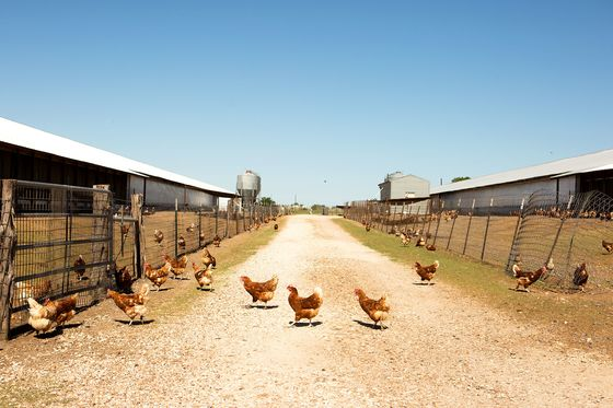 Farmers See Sustainable Eggs as the Industry's Next Big Thing