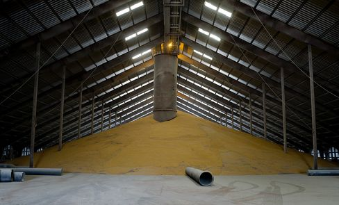 Corn Futures Head for Bear Market on Signs of Ample U.S. Supply