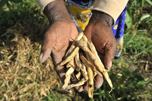 Mbinya holds beans harvested on her farm.