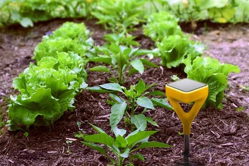 A Smart Gardening Tool to Turn the Brownest Thumbs Green