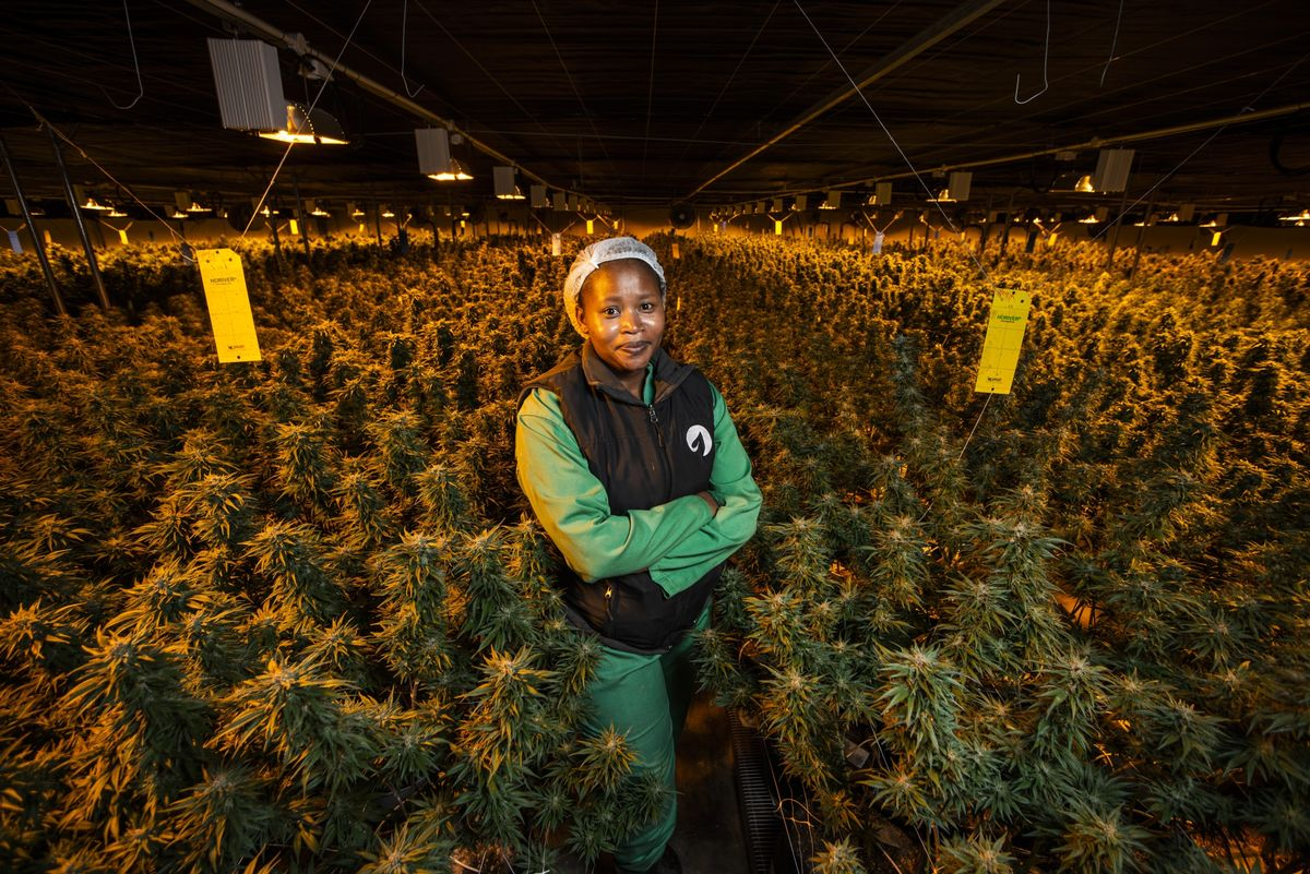 Cannabis Growers Rising Up in Lesotho