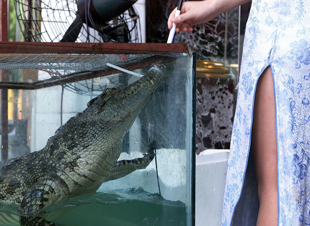 China Bans Trade, Consumption of Wild Animals to Counter Virus