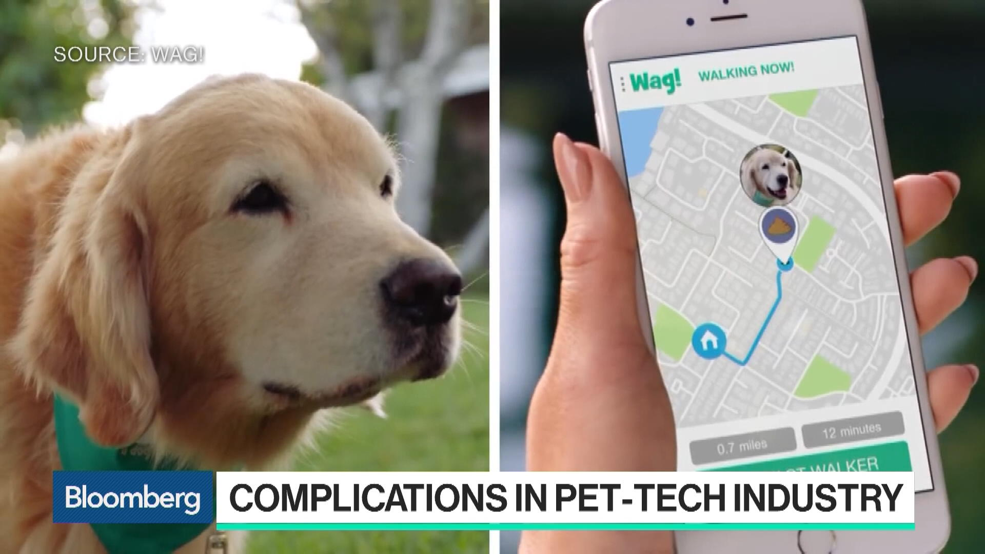 Wag, the 'Uber for Dog-Walking,' Is Drawing Uber-Like