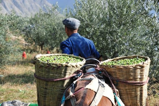 Olive Oil Is BecomingOne of the Hottest Ingredients In Asia