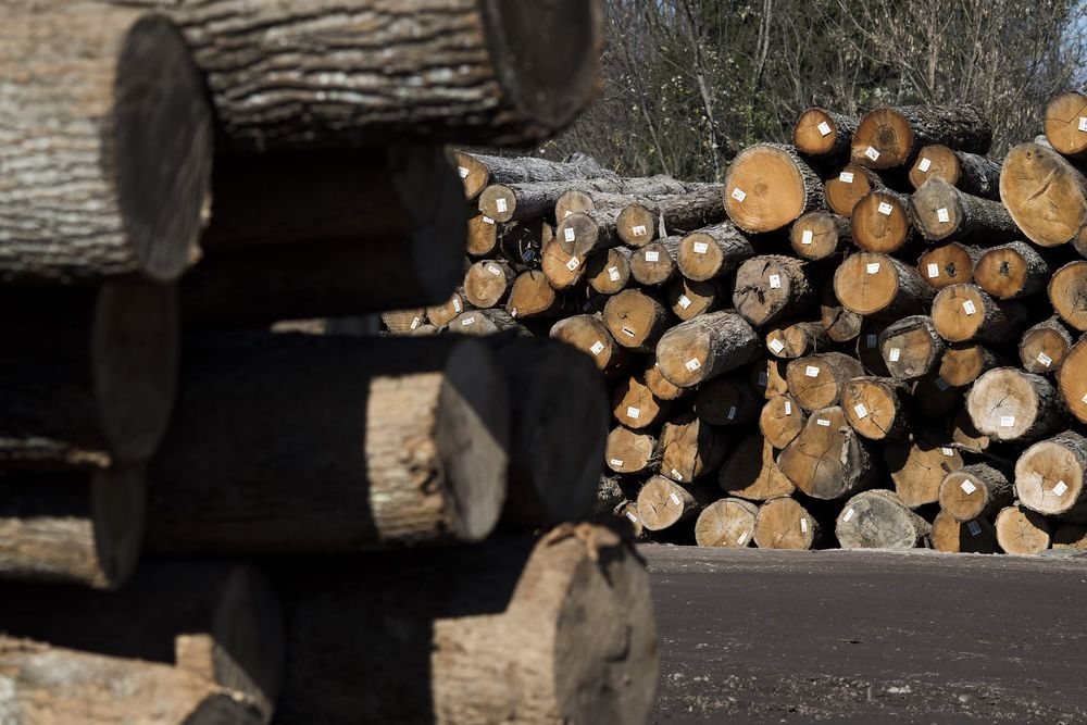 Trump Gives The Gift Of High Lumber Prices Bloomberg