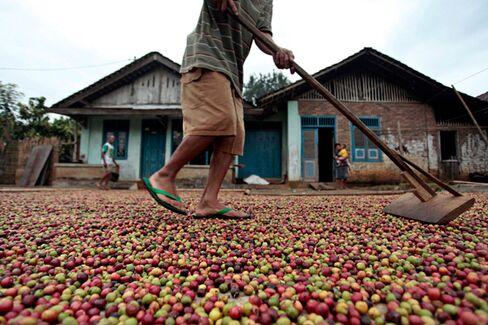 Bad Java: Poor Coffee Crop Adds to Indonesia's Woes