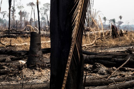 Amazon Rainforest Fire Season Starts With Outlook for Record Burn