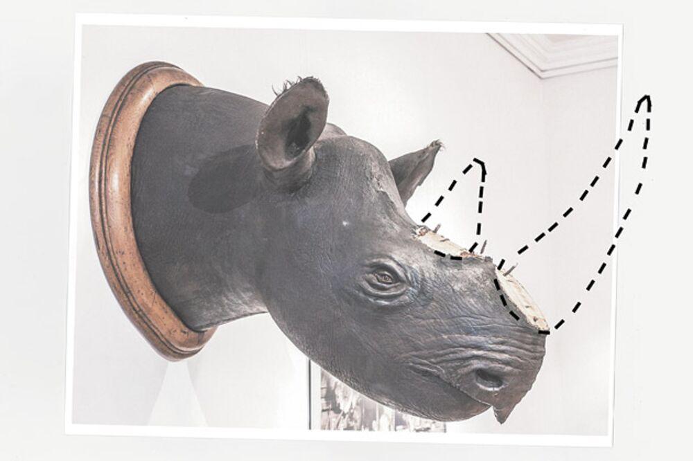 The Irish Clan Behind Europe's Rhino-Horn Theft Epidemic - Bloomberg