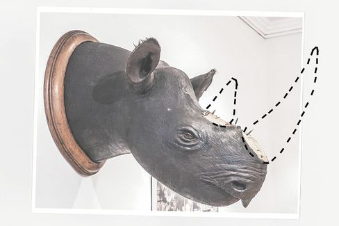 The Irish Clan Behind Europe's Rhino-Horn Theft Epidemic