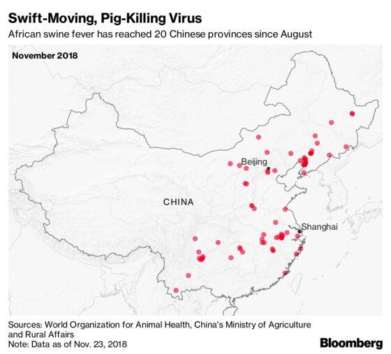 Killer Pig Virus Gets Closer to Beijing, Shanghai