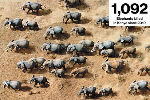 Saving Kenya's Elephants With Drones