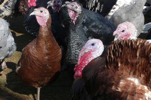 What Does a $225 Turkey Taste Like?