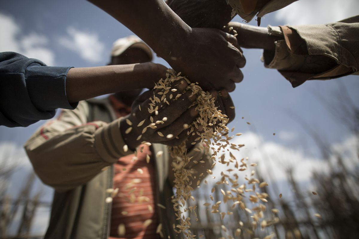 Zimbabwe Targets $150 Million in Agriculture Loans From Banks
