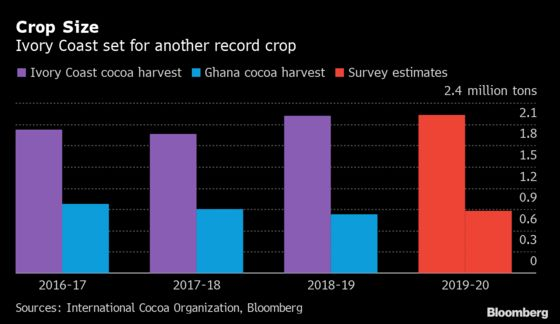 What Cocoa Traders Need to Know as West African Harvests Begin