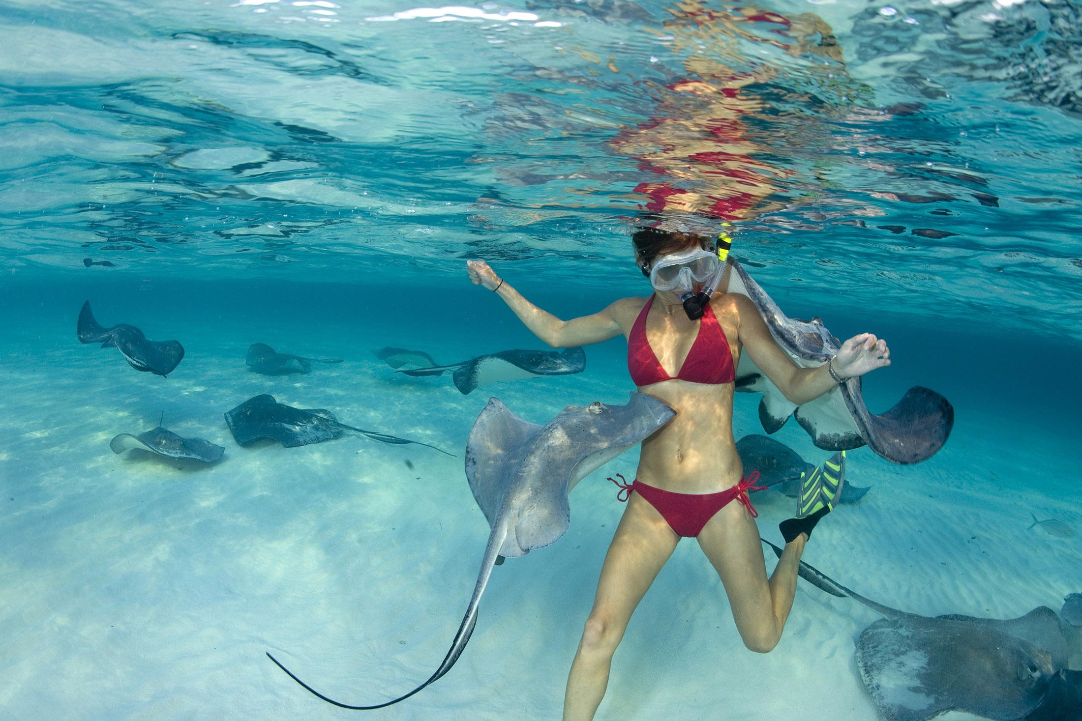 Animals Cayman Islands