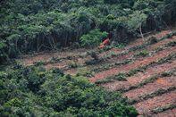1473828525_indonesia deforestation
