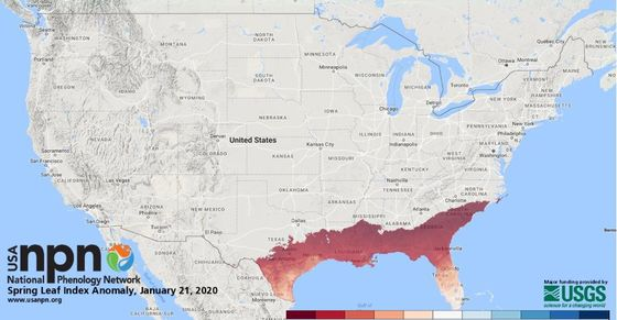 Warm Winter Has Leaves in the Southeast Popping Out Way Early