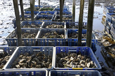 Virus Makes French Oysters Rarer Treat for Holiday Season