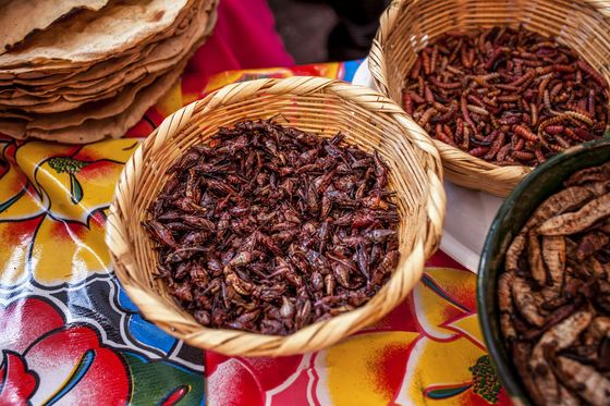Toasty, Salty, and Extra Crunchy: Grasshoppers Hop to a Menu Near You