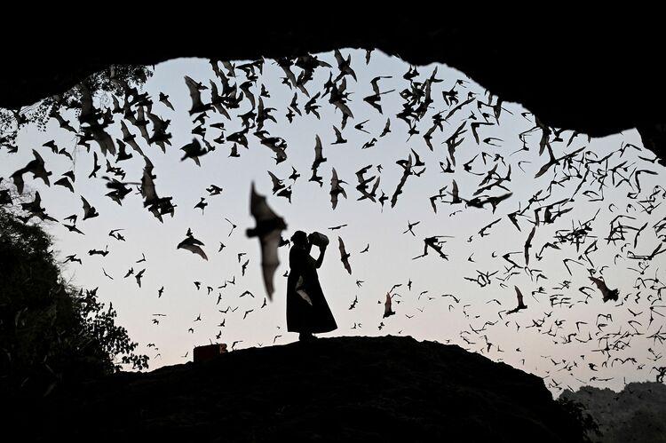 bats GETTY sub