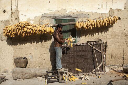 China May Need Record Corn Imports to Bridge Shortage, Yigu Says