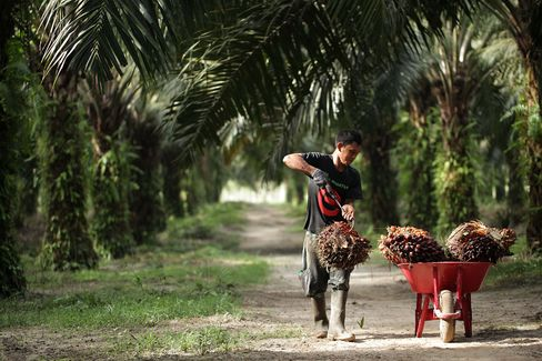 Palm Oil Exports From Indonesia Set to Sink Most in Four Months
