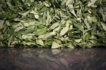 Tea leaves move along a drying belt while being processed at the Charleston Tea Plantation in Wadmalaw Island, South Carolina, U.S..
