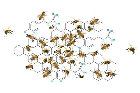 Europe's Bees Could Get a Reprieve From Pesticides