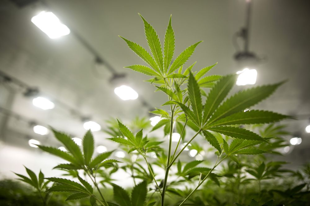 Pot Grower Canopy to Buy British Skin-Care Company