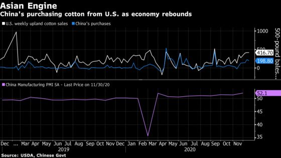 Cotton Futures Rise With Chinese Purchases Pacing U.S. Exports