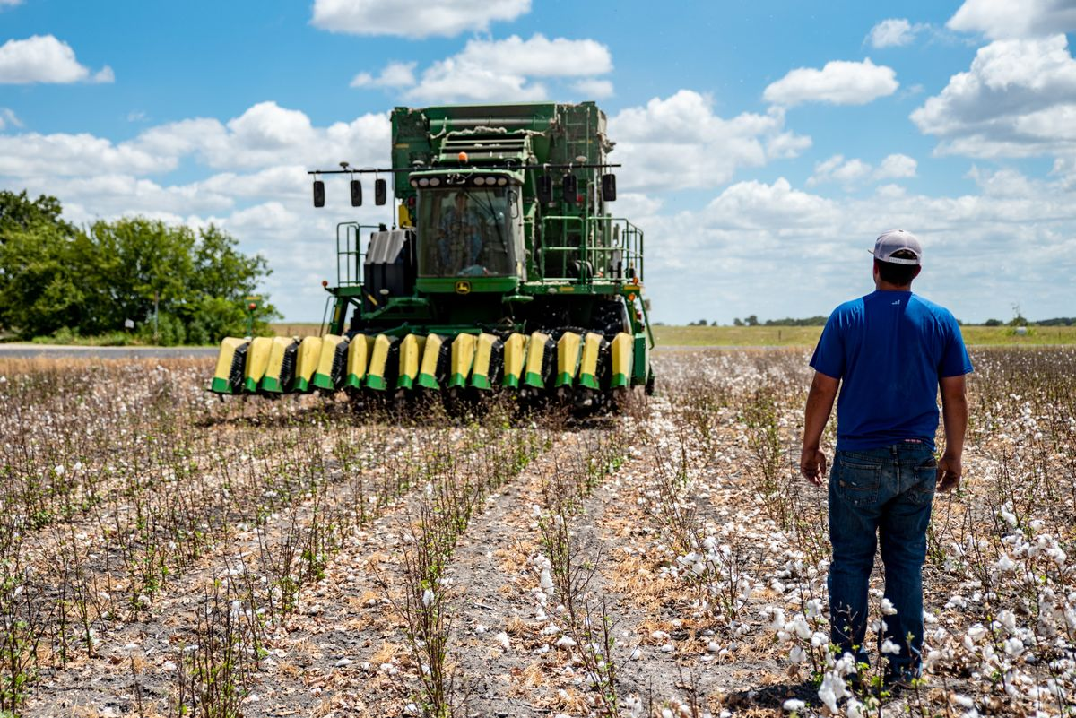 Trade War's Forgotten Farmers Get Crushed in U.S. Cotton Country