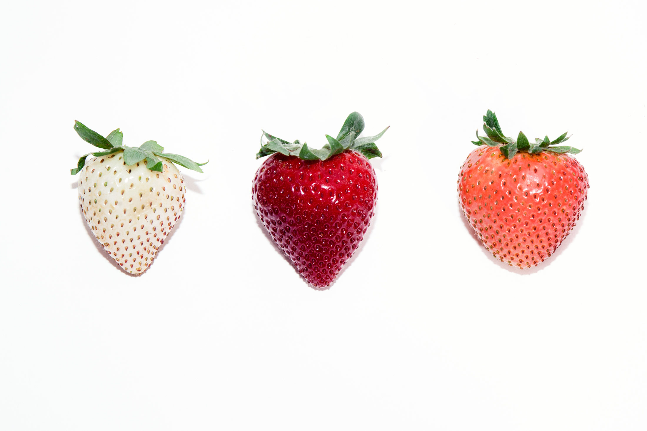 Driscoll's white, red, and pink strawberry varieties.