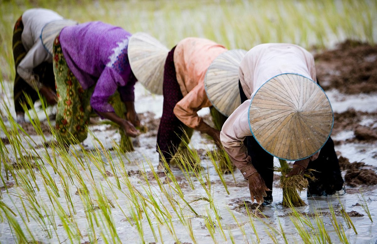 Italy Wins Three-Year EU Tariffs on Rice From Cambodia, Myanmar
