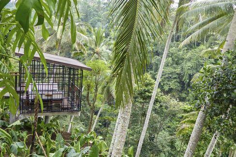 A futuristic treehouse café at Bali's Hoshinoya resort.