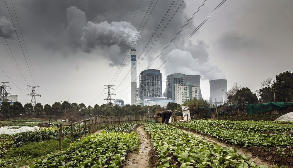 A man tends to vegetables as emissions rise from a nearby coal-fired power station in Tongling, Anhui province, China.