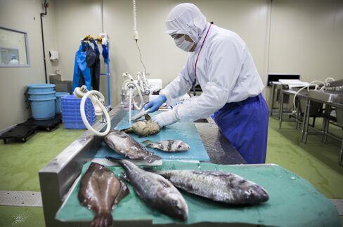 鮮魚加工センターで魚を処理