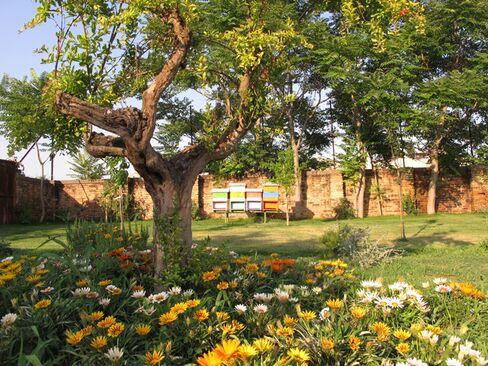 Artist Judi Harvest's honey garden at Linea Arianna Glass Factory, Murano.