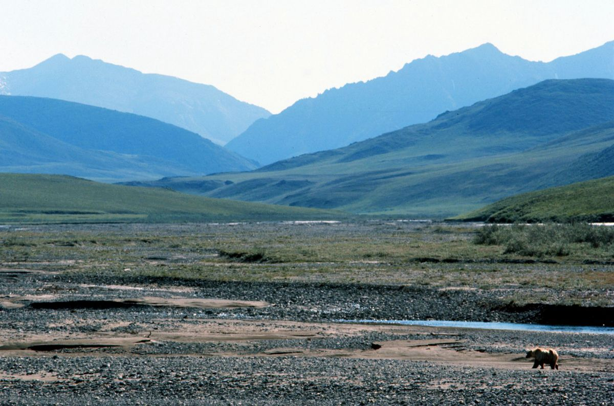 Arctic Refuge Drilling Moves Closer to Reality With Senate Vote