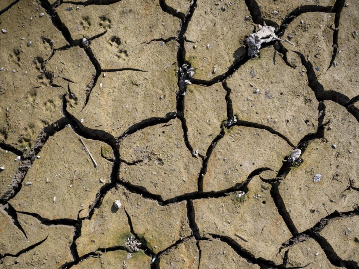 Zambia Won't 'Beg' for Help Fighting Worst Drought Since 1981