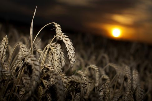 CME Group to 'Assume Responsibility' for Wheat-Delivery Error