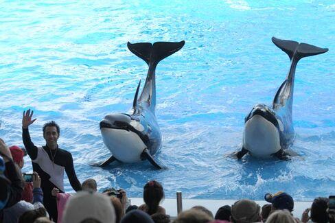 SeaWorld's Latest Problem: Rock Stars Won't Perform There