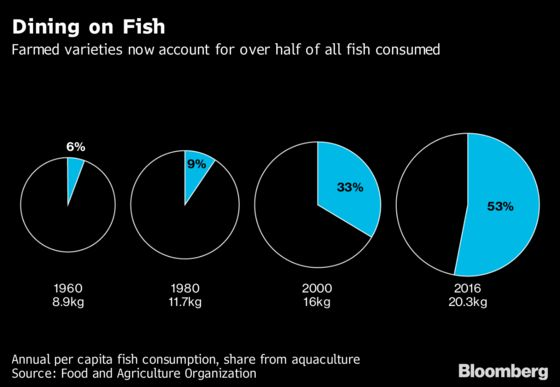 Salmon Farmers Are Scanning Fish Faces to Fight Killer Lice
