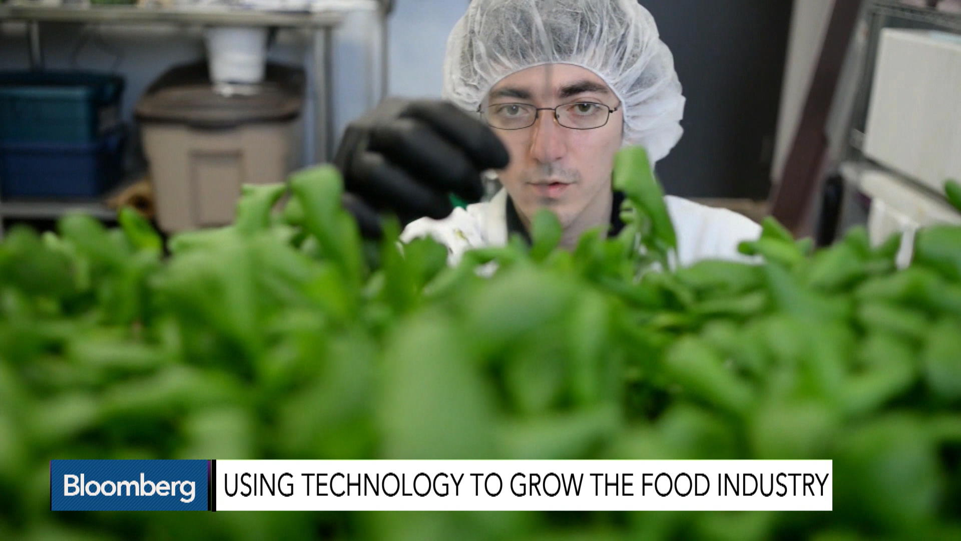 The Growing Trend of Vertical Farming
