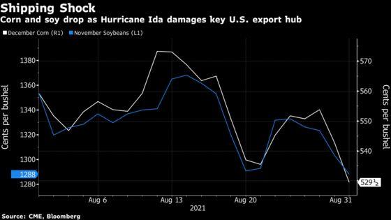 Corn Crashes as Hurricane Ida Devastates Busiest U.S. Export Hub