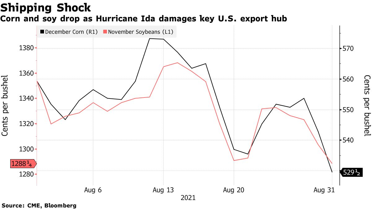 Corn and soy drop as Hurricane Ida damages key U.S. export hub