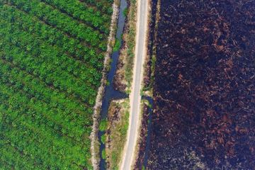 A palm oil plantation stands next to burnt land in this aerial photograph taken in South Sumatra, Indonesia.